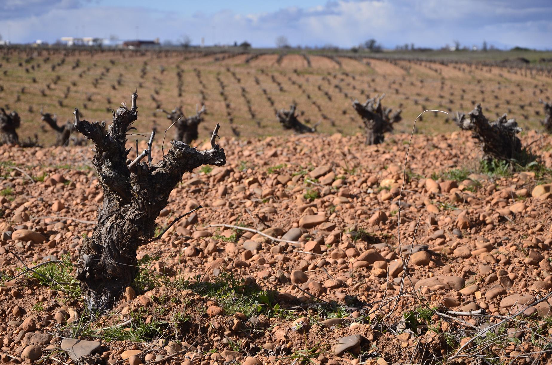 Adjudicación de un Contrato de Servicios de la Junta de Castilla y León
